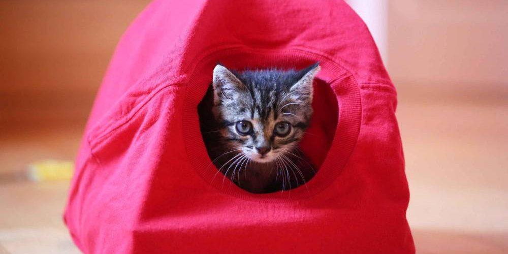 Tente pour chat : que choisir lors de l'achat ? principale
